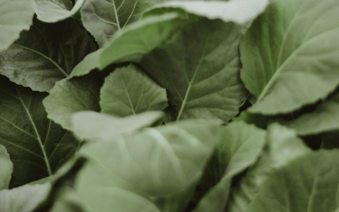 Simple Sauteed Spinach Recipe